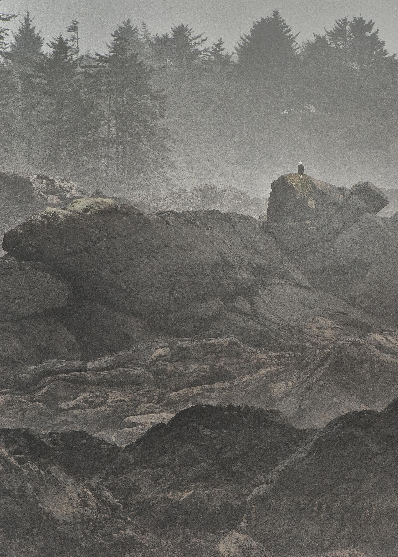 Landscape 17-57
